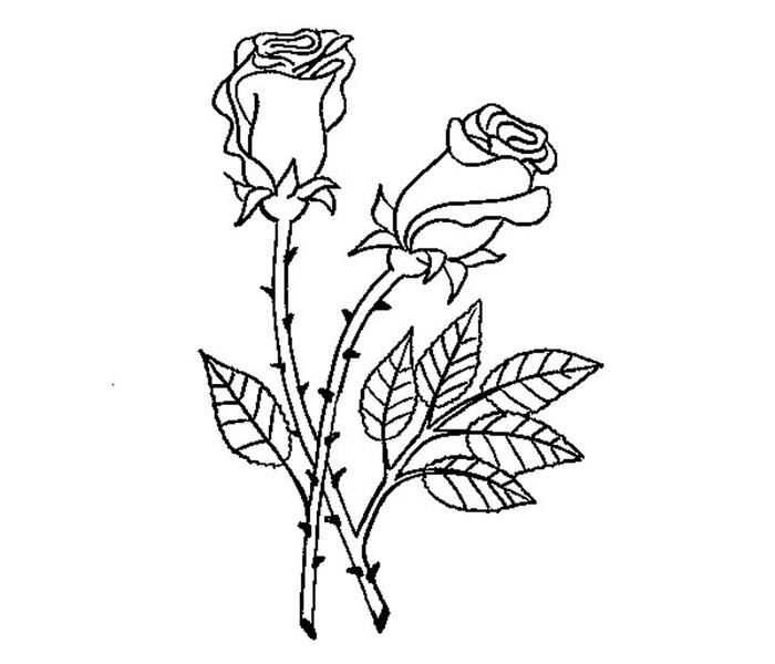 Ausmalbilder Blumen Rosen ~ Die Beste Idee Zum Ausmalen von Seiten